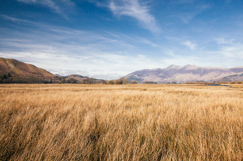 Golden grass and fells at Derwent Water